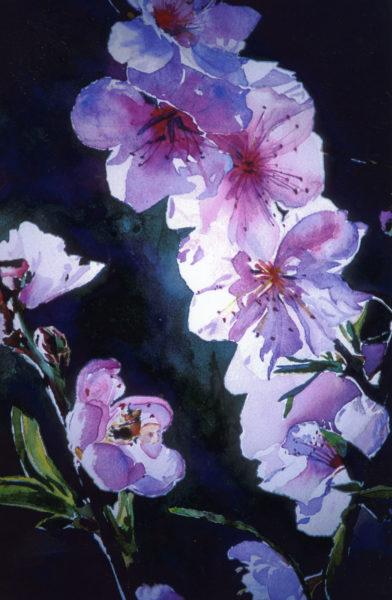 peach blossoms watercolor